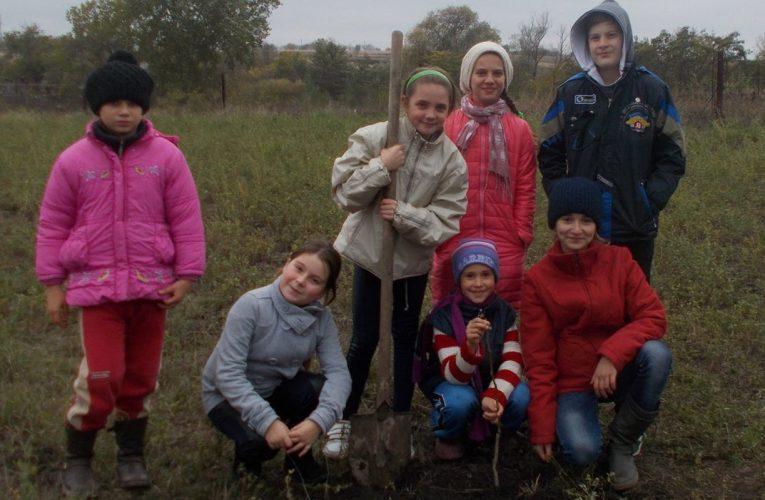 Sadzimy drzewka orzechu włoskiego